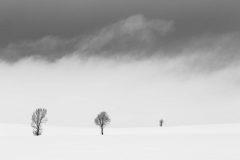 Fog Rolling Over Dead Trees