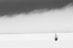 Dead Tree Below Fog Cloud