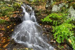 Early Autumn Leaves Around Waterfall