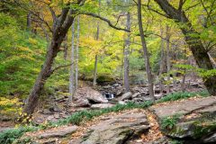 Spruce Creek in Fall Forest