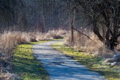 Canal Path in Winter