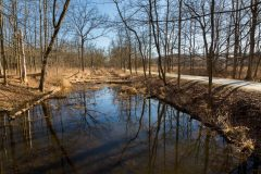 Trail Paralleling Canal
