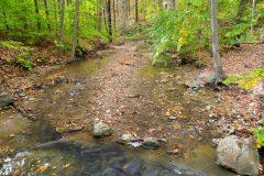 Spring Creek Under Fall Leaves