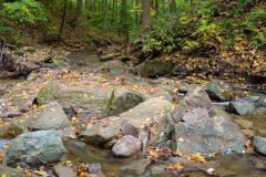Spring Creek and Fall Leaves