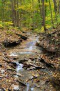 Autumn Colors over Cascading Creek