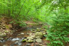 Demarest Kill Stream in Forest