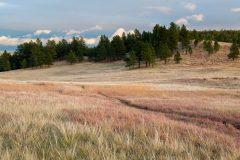 Hiking Trail in Native Grasses