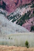 Aspens on Rocky Mountainside