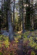 Sun Through Trees Above Granite Canyon Trail