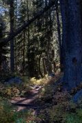 Granite Canyon Trail in Evergreen Trees