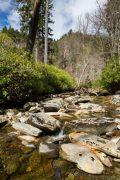Appalachian Mountain Stream