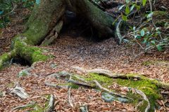 Abstract Tree Root System