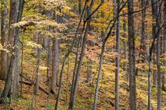 Abstract Autumn Colors on Trees