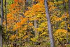 Orange and Yellow Fall Colors