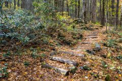 Nature Trail in Fall Leaves