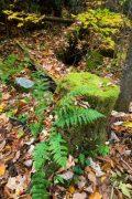 Moss-Covered Tree Stump