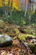 Decaying Log Below Fall Colors