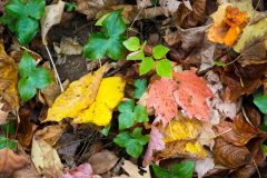 Fallen Autumn Leaves Abstract