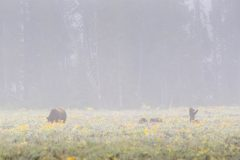 Grizzly Bear Cub Standing Up in Wildflowers