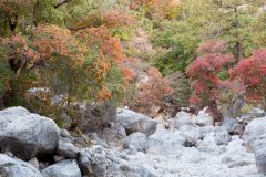 Fall Colors in Dry Creek Bed