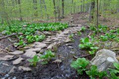 Muddy Creek Crossing