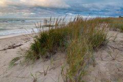 Grasses in Wind on Lake Michigan
