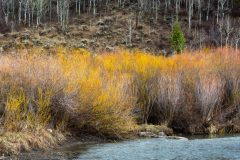 Willows Lining Flat Creek