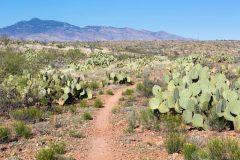 Desert Hiking in Las Cienegas