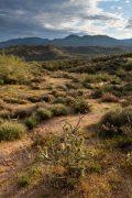 Desert Vegetation and Mountains