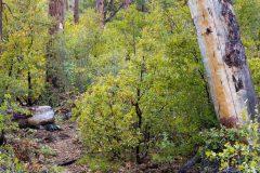 Arizona Trail in High Desert Forest