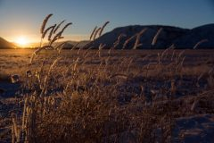 Frosted Grasses at Sunset