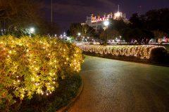 Jackson Square Christmas Lights