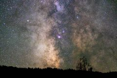 Center of Milky Way Galaxy Above Trees