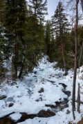 Fish Creek in Forest