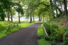 Old Carriage Road Below Arching Trees