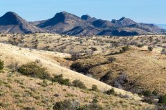 Sonoran Desert Grasslands and Hills