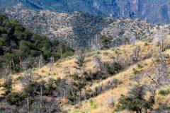 Santa Rita Mountains and Foothills