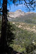 Ponderosa Pine and Mount Wrightson
