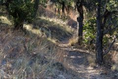 Hiking Trail in High Desert Forest