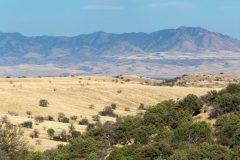 Whetstone Mountains over Desert Grasslands