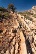 Juniper Tree on Bear Mountain