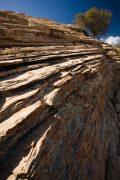A juniper tree stands on a limestone ridge on Bear Mountain in Sedona, Arizona