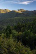 Forest Below Lower Snake River Mountain Peaks