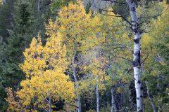 Autumn Colors Along Hillbender Trail