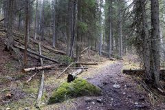 Mature Forest Surrounding Hiking Trail