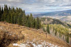 Trail Cutting Through Grass Meadow