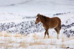 Horse Walking Through Snow