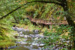 Sweet Creek Trail on Boardwalk