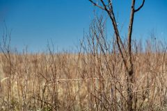 Native Grass and Plant Stems