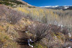 Aspen Forest Below Aspen Trail